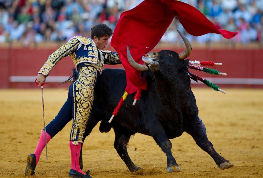 Bullfight without blood, the turn of the Balearics